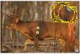 Eze-Scorer With Shoot-N-C Overlay Whitetail Deer Targets 23x35 Inch Two Folded Deer With Four 8-Inch Overlays - 37431