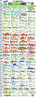 Florida USA Fish Guide Ruler - AC5017