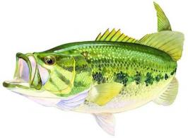 Fish Decals - ST5599