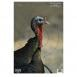 "Birchwood Casey 35403 Pregame Animal Targets Turkey 12""x18"" - 35403"